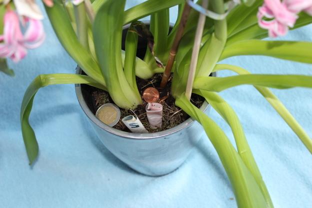 Legen Sie Scheine und Münzen in den Blumentopf.