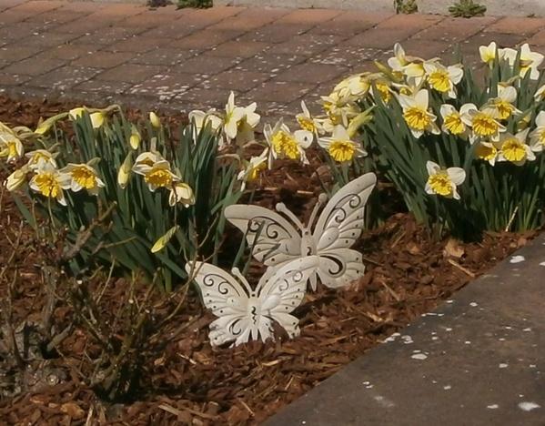 Wählen Sie einen Platz aus, an dem es im Frühling blühen soll.