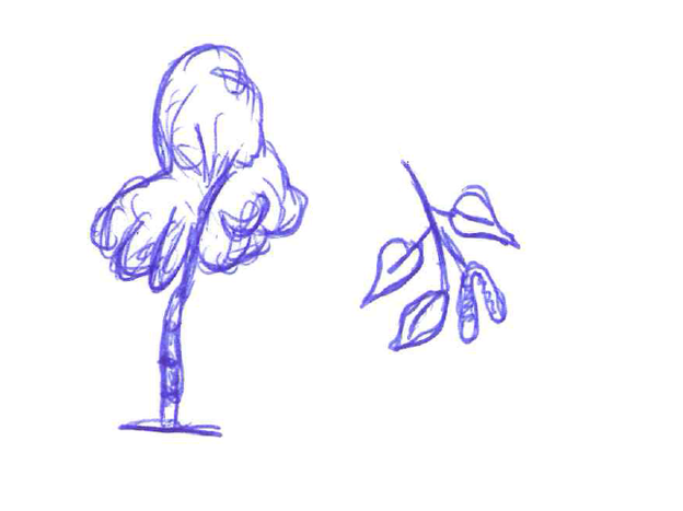 Birken besitzen einen hellen Stamm.