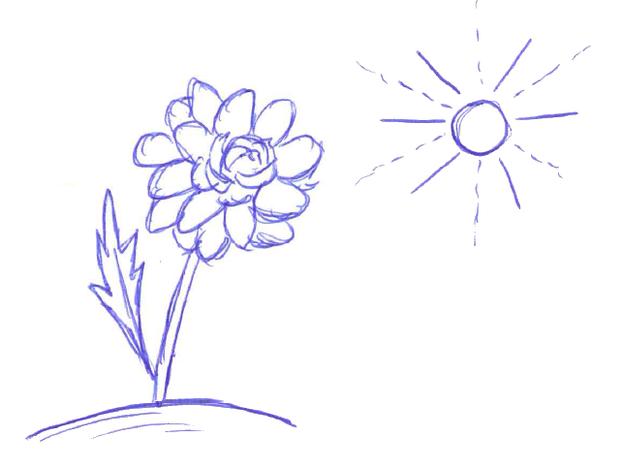 Dahlien brauchen viel Sonne.