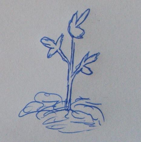 Pflanze einsetzen.