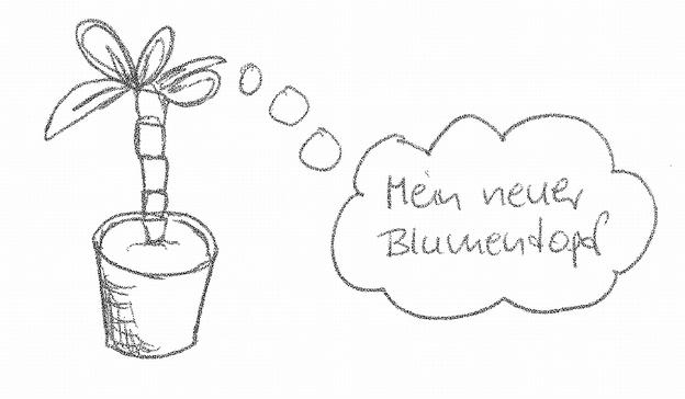 Pflanze eintopfen.