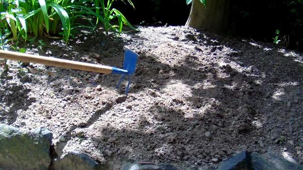 Im lockeren Boden gedeihen die Knollen besonders gut.