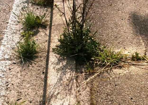 Pflanzen erobern sich Lebensräume