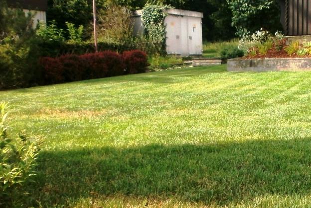 Aufwendig gepflegter Rasen