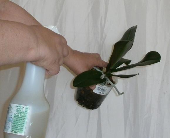 Pflanzen benetzen.