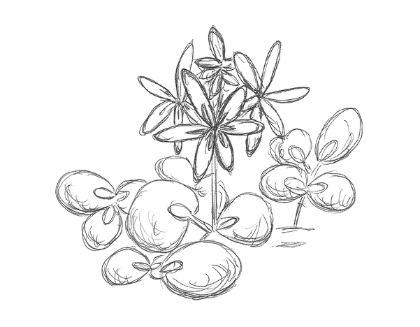 Wasserhyanzinthe