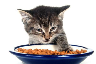 Katzenfutter ohne Zucker darbieten!