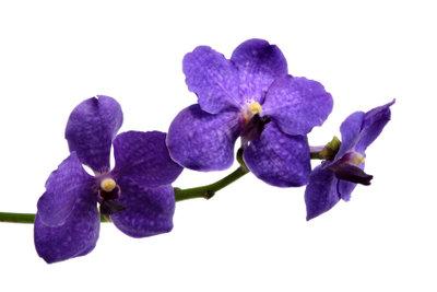 Orchideen brauchen einen hellen Standort.