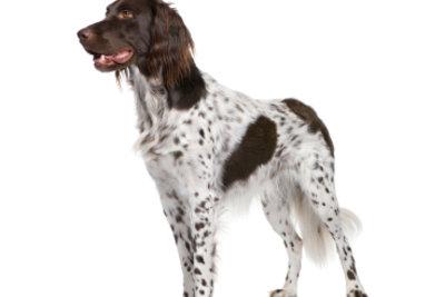 Jeder schöne Hund will sein Eigenheim.