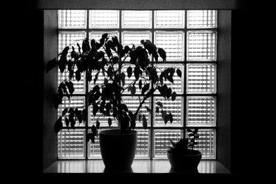 So pflegen Sie Fensterbänke aus Marmor.