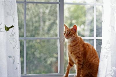 Ein Fenstergitter schützt Ihre Katze.
