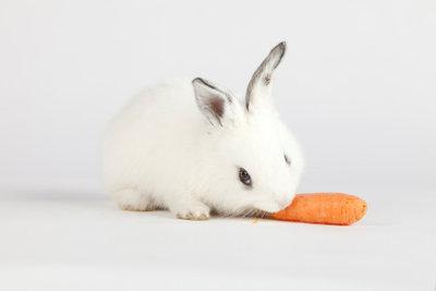 Nicht nur Gemüse wird Kaninchen erfreuen.