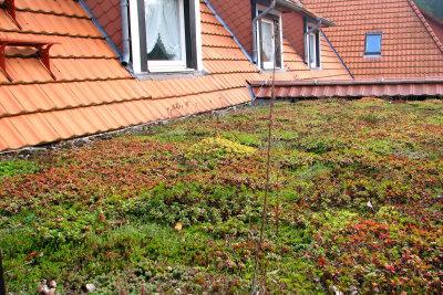 Ein Gründach sorgt für gesundes Klima.