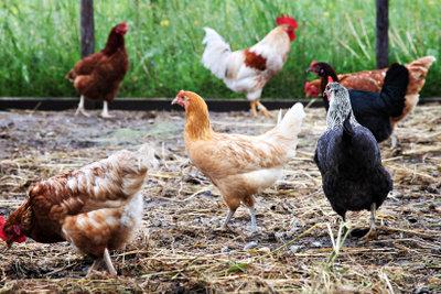 Ein Hühnerstall braucht einen Auslauf.