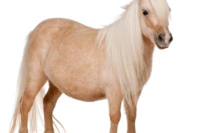 Sie können beim Schlachter Pferde kaufen.