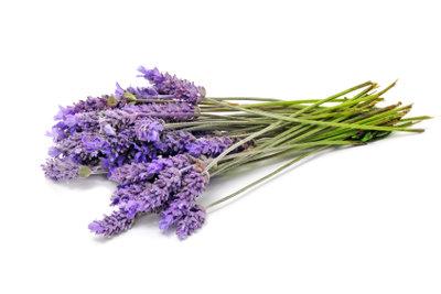 Gegen Silberfische kann Lavendel helfen.