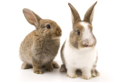 Süße Kaninchen brauchen ein artgerechtes Heim.