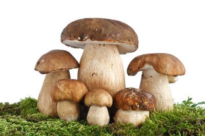 Pilze und Moos gehören in Wälder.