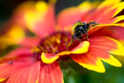 In der Natur gehören Insekten dazu.
