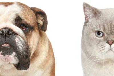 Haustiere können den Bewegungsmelder auslösen.