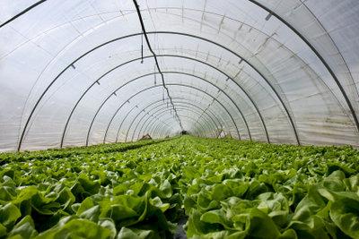 Auch einfache Foliengewächshäuser bringen gute Ernten.