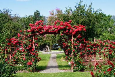 Für solche Pracht braucht es Rosenbögen.