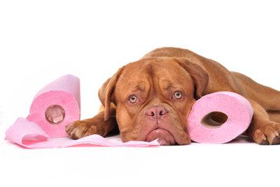 Das Hundeklo - eine Erziehungshilfe