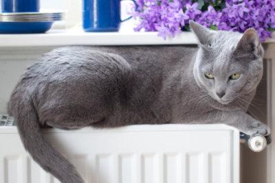 Eine funktionierende Heizung lässt Katzen schnurren.