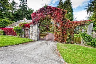 Efeu ist  auch an Gartentoren eine rankende Schönheit und lässt sich gut vermehren.