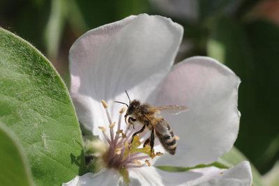 Bienenstiche können große Schwellungen verursachen.