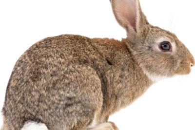 Kaninchen lieben einen großen Stall.