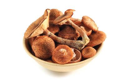 Hallimsch-Pilze richtig zubereiten
