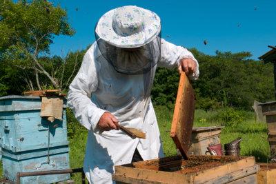 Ein Imker hilft Ihnen beim Wespenproblem.