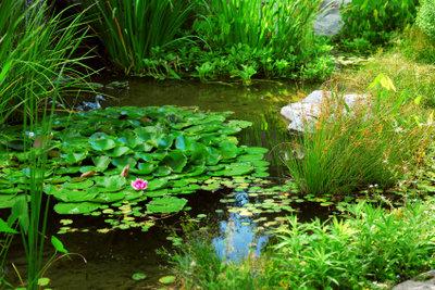 Holen Sie die Natur in Ihren Garten zurück.