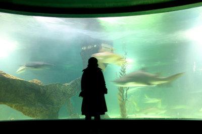 Eine Aquariumabdeckung ist notwendig.