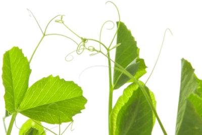 Exotische Pflanzen sollten richtig gepflegt werden.