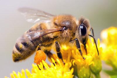 Ein Bienenstich schmerzt und juckt.
