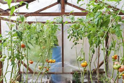 Bauen Sie Ihren Tomaten ein Haus.