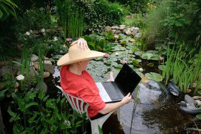 Wasserpflanzen können als natürliche Filter dienen.
