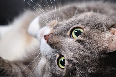 Verjagen Sie Katzen artgerecht.