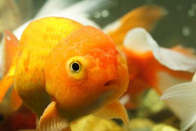 Fische lieben gutes Futter!