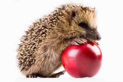 Igel fressen keine Äpfel