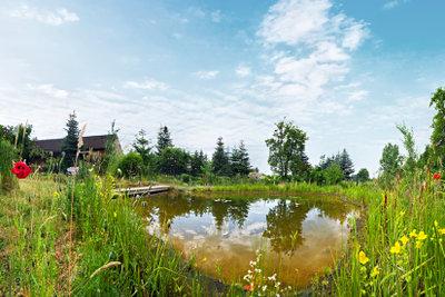 Eine ausreichende Teichbepflanzung wehrt Algen ab.