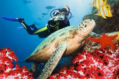 Korallen sind schön auch als Kette.