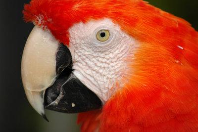 Vögel könnten sich am Volierendraht verletzen.