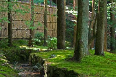 Die Qualität des Bambus ist wichtig.