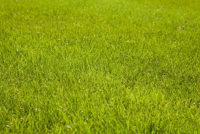 Rasenflächen werden durch regelmäßiges Mähen strapazierfähig.