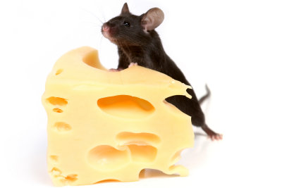 Käse ist kein Futter für Mäuse.