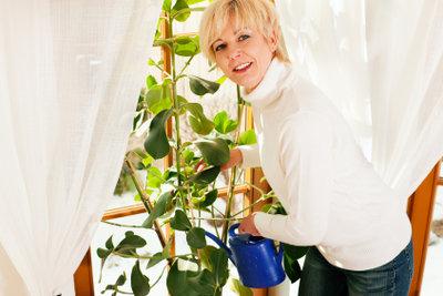Hauspflanzen pflegen ist nicht schwer.
